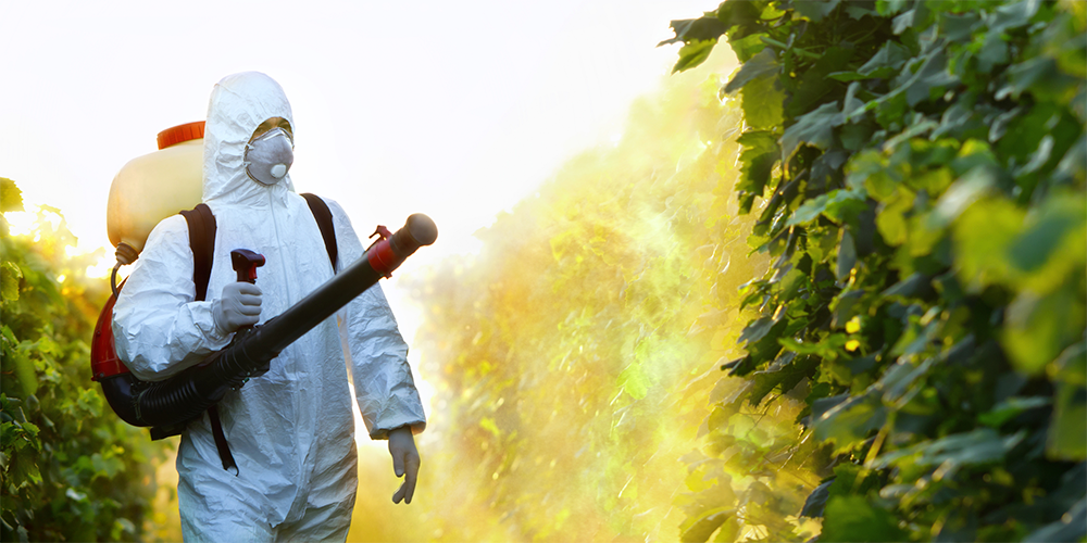 A person spraying biopesticides.
