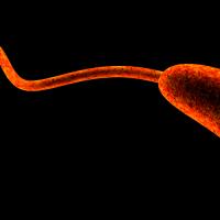 Scientists Create Cholera Outbreak Models