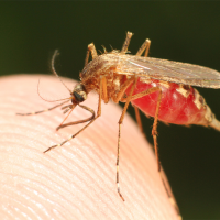 New Advances Show Promise in Malaria Treatment