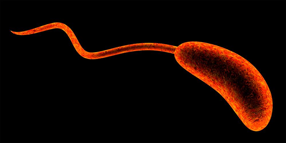 A microorganism.